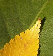 2 leaves cv