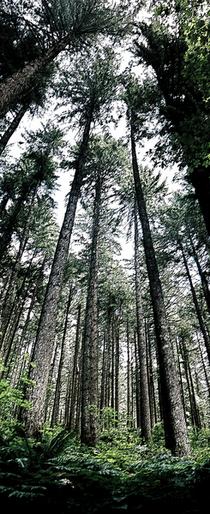 Forest art cv