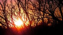 Sun down trees cv