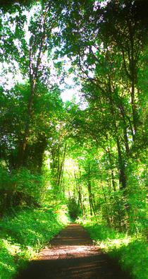 Green walkway cv