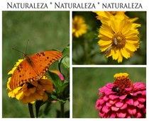Naturaleza cv