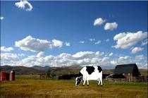 Cow cv