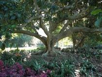 Botany cv
