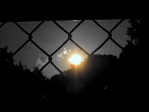 Sunlight in fence b w focal cv