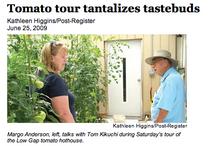 Tomato 2 cv