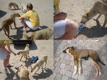 Dogs 1 cv