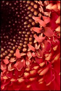 Coralsun  2 cv