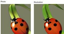 Ladybugs cv