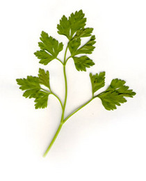 Parsley cv