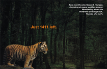 Tiger blog cv