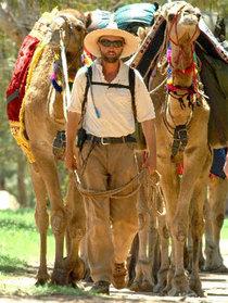 Camel cv