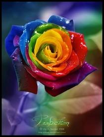 Art zieh phow tows colorful photomanip rainbow rose 609e912d93eba2362f5f75c74d2fa084 h cv