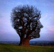 Tree cv