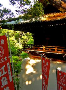 Enoshima cv