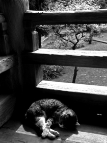 Sleeping cat cv