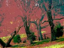 Bigtreesposter cv