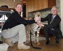 Cheetah 1  cv