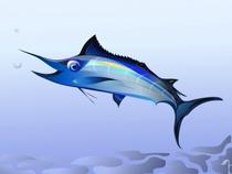 Blue marlin cv