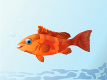 Gold fish cv