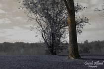 Tree2 cv