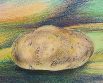 Potato sketch colored pencil cv