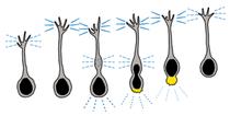 Migrationmodel2 adhesionendosomes forweb cv