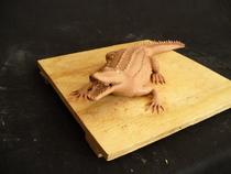 Side croc cv