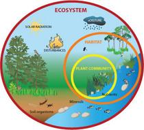 Ecosystem cv