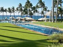 Maui cv