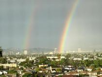 Rainbow cv