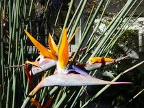 Tz australia 1 165 cv