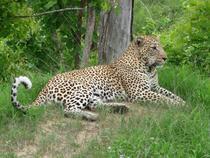 Leopard2 cv