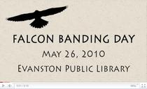 Falcon banding cv