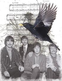 Blackbirdd1 cv