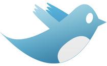 Blue bird cv