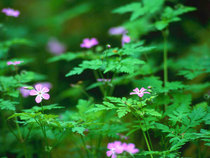 Forest flowers cv