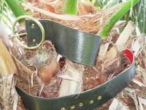 Tree snake cv