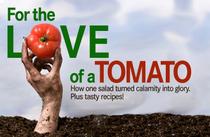 The tomato cv