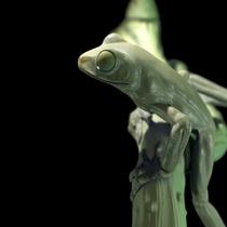 Frog 1 cv