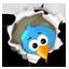 Th twitter 64x64 cv