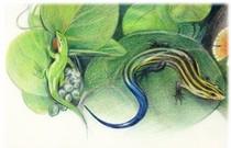 Greenanolefivestripe cv