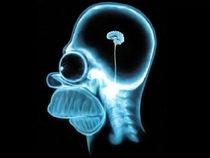 Homer intelligence cv
