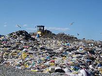 Plasticbag cv