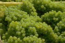 Winery cv