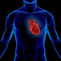 Heart transplant cv