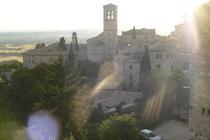 Assisi cv