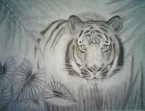 Tiger cv