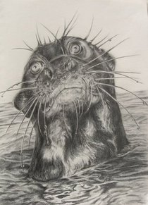 Otter cv
