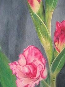 Gladiolas cv