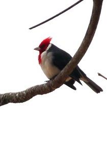 Recovered mar 07 2012 593 cardinal cv